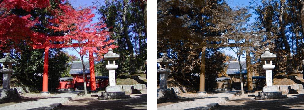 <紅葉と神社の風景>
